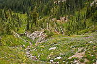 A stream flows away through a meadow of late summer wildflowers south of Chinook Pass in the William O Douglas Wilderness of the Wenatchee National Forest, Cascade Range, Washington state, USA