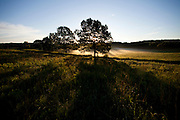 ICF_Prairie.-Early morning on the prairie. The International Crane Foundation's (ICF) mission is to conserve cranes and the ecosystems, or landscapes, on which they depend. In 1980 ICF began restoring native prairie, savanna, wetland, and woodland communities on the newly acquired 160 acre property north of Baraboo, Wisconsin.  The site now serves as an outdoor laboratory with over 100 acres of restored landscapes alongside another 60 acres of natural landscape, where the process of restoration can be explored and the lessons applied worldwide.