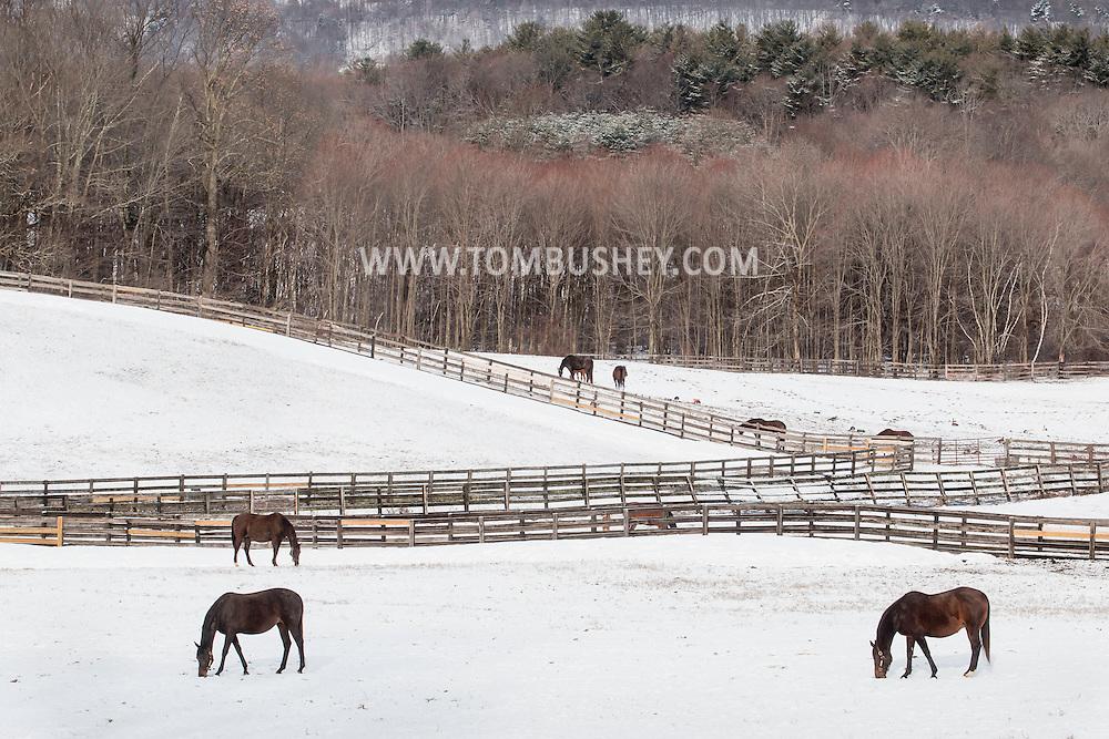 Otisville, New York - Horses graze in snow-covered fields on April 1, 2015.