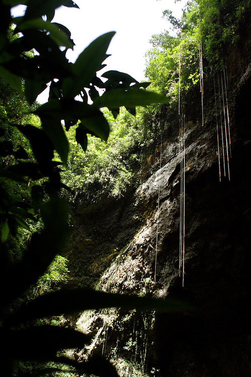 Vines hang from the top of a sink hole at the Camuy Caves in Puerto Rico.