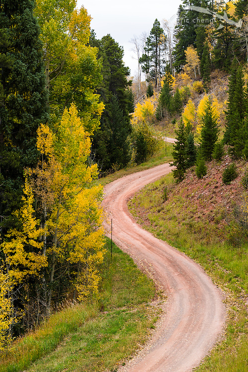 The road up Aspen Mountain, Aspen Colorado.