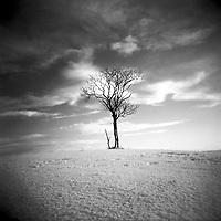 Lone tree in a barren landscape under warm sky