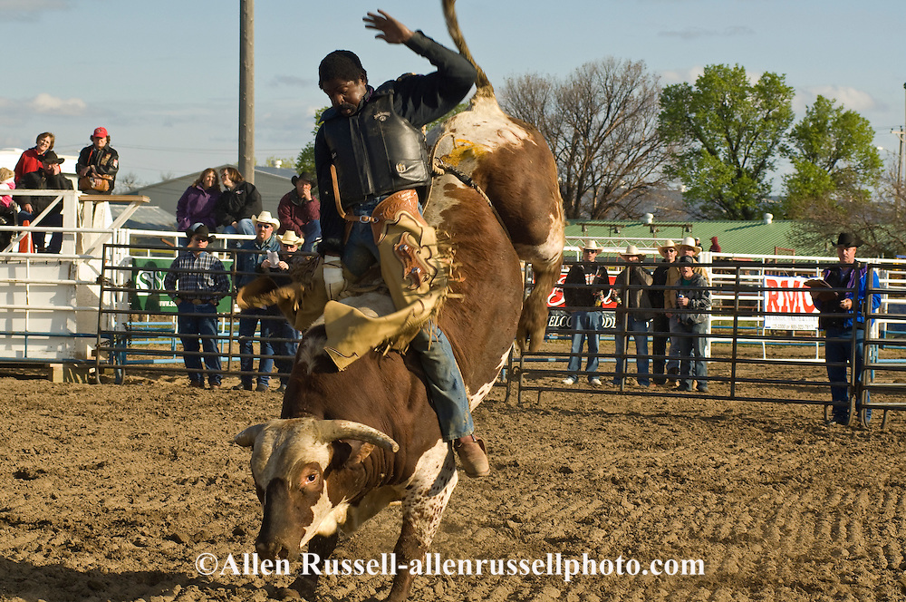 Bull Rider, Miles City Bucking Horse Sale, Montana, Black Cowboy, <br /> MODEL RELEASED on rider only