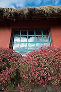 Flowers bloom outside a blue window.