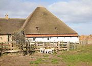 Sheep farm, Texel, Netherlands,