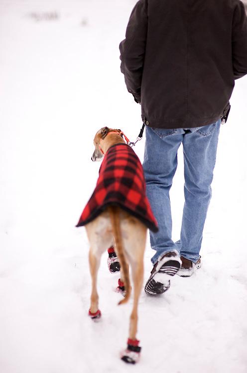 Fast Friends #2, Greyhound Rescue Fostering