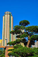 Chine, Hong Kong, Kowloon, banzai et immeuble d'habitation // China, Hong Kong, Kowloon, banzai tree and building