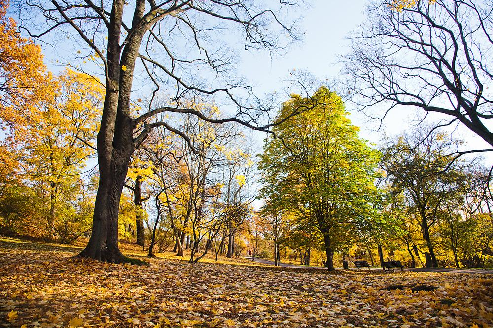 Långholmen in autumn colours, Stockholm.