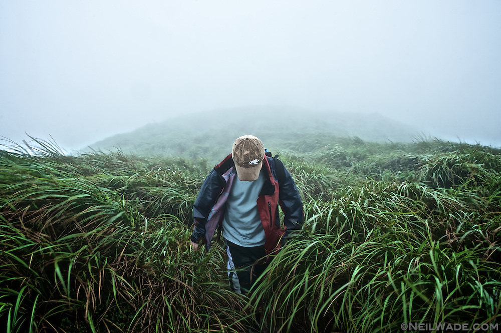 A hiker in a rain storm walks through tall grass in Yangming Shan National Park in Taipei, Taiwan.
