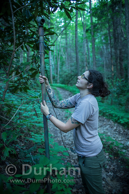 Vanessa Rojas<br /> PhD Student<br /> Biology Department<br /> Indiana State University sets up an Anabat bat detector along a road in the Cherokee National Forest, Tennessee. The sensor will record the ultrasonic calls of bats in the area for several nights, and can determine species based upon call acoustics.