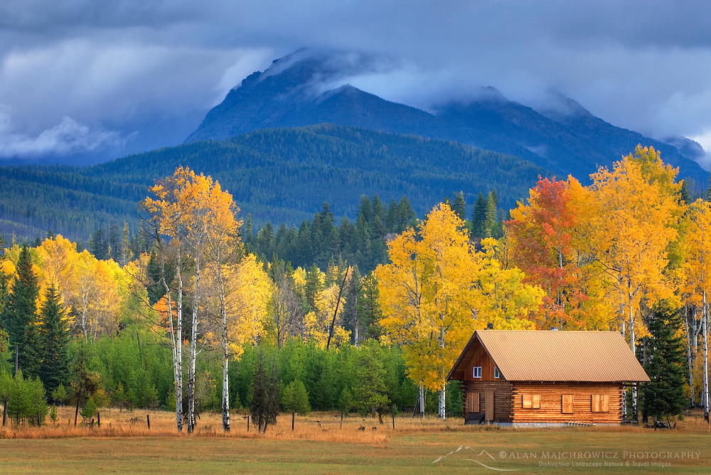 Small log cabin nestled among a grove of aspen trees in autumn foliage, North Fork Flathead River Valley Montana USA
