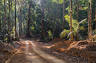 The Bai Shan Lin logging road through the beautiful Berbice forests.
