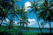 Sun, sea and palm trees at Nauru lagoon, South Pacific