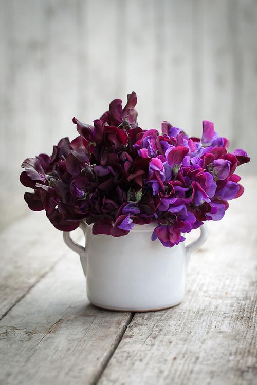 Lathyrus odoratus 'Beaujolais' and 'Cupani' - sweet pea