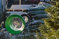 THEMENBILD - Christbaumverkauf von heimischen Tannenbäume, aufgenommen am 02. Dezember 2017, Innsbruck, Österreich // Christmas tree sales of domestic fir trees on 2017/12/02, Innsbruck, Austria. EXPA Pictures © 2017, PhotoCredit: EXPA/ Stefanie Oberhauser