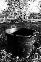 02/12/2010 Acquaviva delle Fonti, bidone di plastica utilizzato per la raccolta delle olive...La raccolta delle olive e la produzione dell'olio extravergine sono un rituale che si protrae da moltissimo tempo in Puglia, questo avviene solitamente nel periodo che va da novembre a dicembre, mentre il lavoro di preparazione e coltivazione si svolge lungo tutto l'arco dell'anno..La raccolta è seguita nella maggior parte dei casi, quando le olive non vengono vendute all'ingrosso, dalla molitura presso gli oleifici per la produzione di quello che da queste parti viene chiamato anche oro verde..