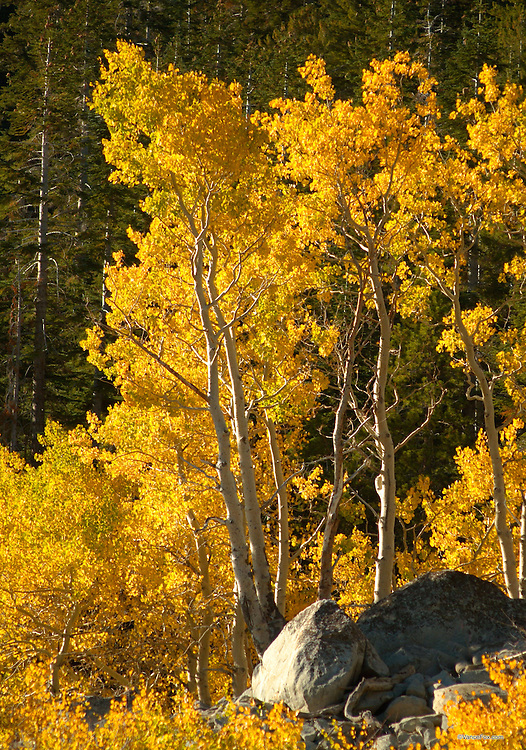 Fall Colors - Mt Rose