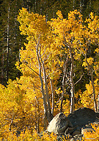 Fall Colors - Mt Rose