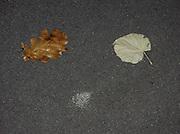 Le hasard dessine un visage: deux feuilles mortes, un tache de chewing-gum sur la route, voilà! Der Zufall zeichnet ein Gesicht: zwei Blätter und ein Fleck Kaugummi genügen - oder etwa nicht? © Romano P. Riedo