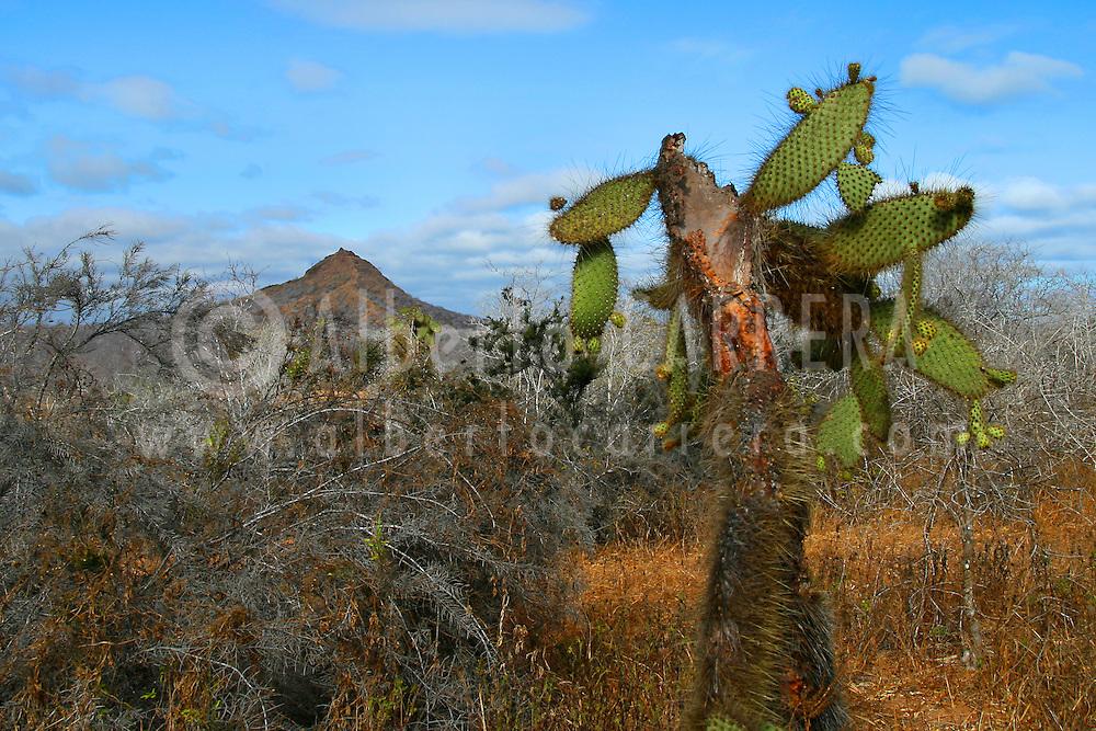 Alberto Carrera, Galápagos National Park, UNESCO, World Heritage Site, Biosphere Reserve, Galápagos Islands. Ecuador, South America