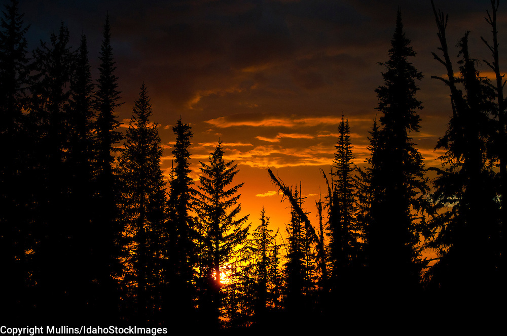Sunset in forest in Gospel Hump Wilderness Area, Nez Perce National Forest, Idaho