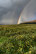 Rainbow at the Valle Grande, with shrubby cinquefoil in bloom, Valles Caldera National Preserve, (vertical) © 2018 David A. Ponton