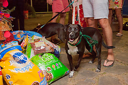 Roux is excited by what's been left under the Christmas Tree.  Dogs Brees and Roux sniff out what's under the Christmas Tree.  Christmas Tree Lighting and Seasonal Fundraiser for the Humane Society of St. Thomas.  St. Thomas, USVI.  11 De© Aisha-Zakiya Boyd