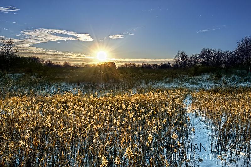 Deer trail through tall grass in winter;  Eden Prairie, MN.