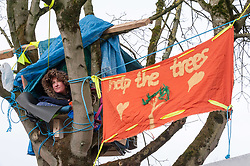 © Licensed to London News Pictures; 14/03/2020; Bristol, UK. Campaigners for the Save The M32 Maples Campaign have built and occupied tree houses to protect three remaining Norway Maple trees on Lower Ashley Road in the St Pauls area of Bristol close to the M32 motorway from being cut down by a developer. The campaign wants the trees kept to enhance the environment and help remove pollution in what is a traffic congested area. The campaign has asked the police Serious Fraud Unit to investigate allegations of a fraudulent Bristol City Council giveaway of £500,000 of public property, including the trees. Campaigners have obtained documents which show the mature trees fall outside the boundary of the land on Lower Ashley Road owned by John Garlick, and they claim the strip of land the three remaining protected trees are on belongs to Bristol City Council's highways department. Bristol City Council denies the claim and says the existing maps are inaccurate and that the trees are not on council owned land. Two of five trees originally there were felled on New Year's Eve, and campaigners chained themselves to remaining trees to prevent them being cut down. Photo credit: Simon Chapman/LNP.