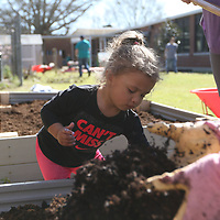 Sawyer Rushing, 2, gets her hands dirty Saturday helping with the ECEC garden as a part of the 10 for Tupelo clean up effort