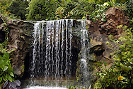 Singapore: Orto Botanico. ospita numerossissime specie di piante tra cui numerose specie di orchide piante x le quali Singapore va famosa