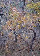Right piece of the Autumn Ephemera triptych.