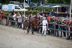 150, My 7th Sunday<br /> KWPN Kampioenschappen Ermelo 2017 <br /> © Hippo Foto - Dirk Caremans<br /> 18/08/2017,