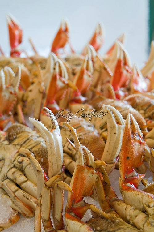 Dungeness crabs on ice at Fishermans Wharf-San Francisco, CA