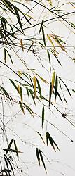 Bamboo vert #7.