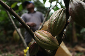 Costa Rica: APPTA Fairtrade Cacao