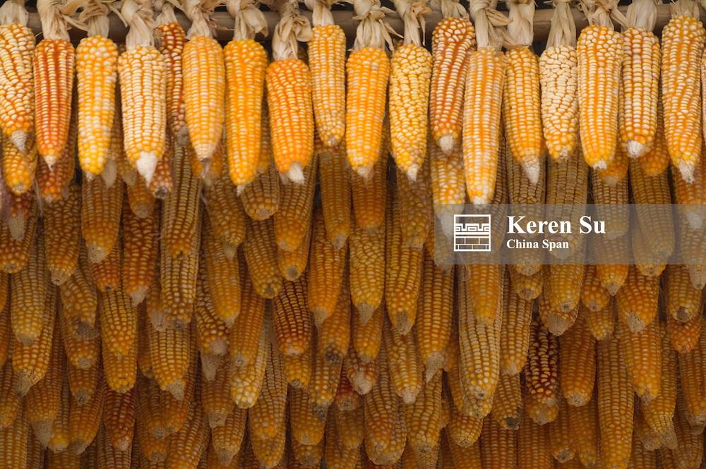 Drying harvested corn ears, Yunnan, China