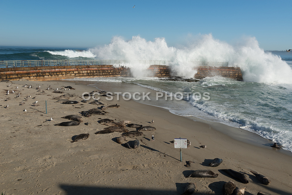 Waves Crashing Over Children's Pool at La Jolla Cove in San Diego California