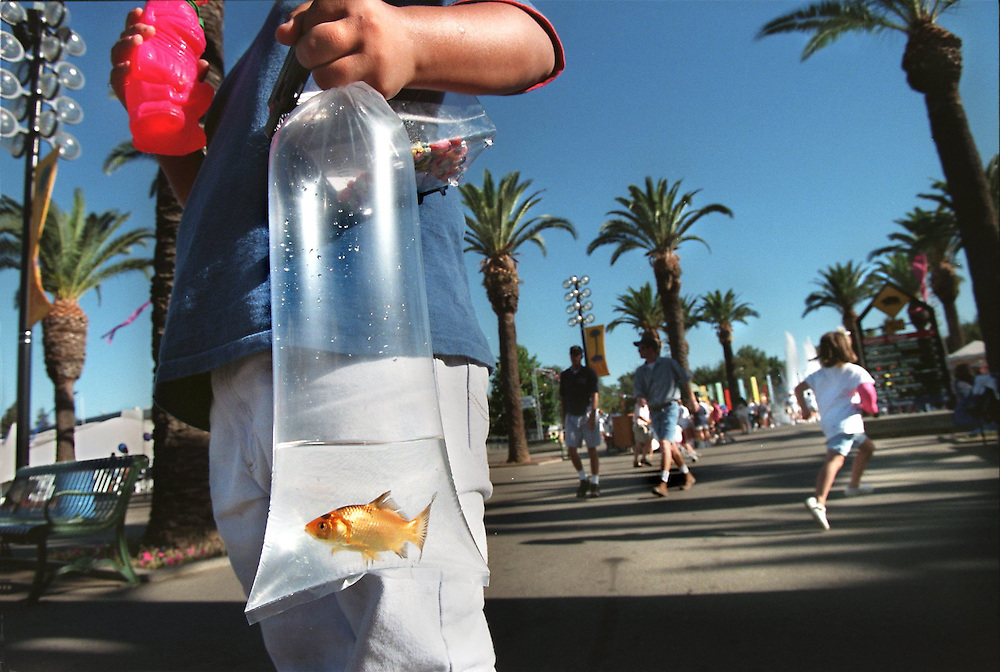 Adrian Barraza 9, carries his gold fish through the California State Fair.  Yes his ping pong ball toss won him this grand prize.  Note the cold drink in his hand for that sweltering Sacramento day.