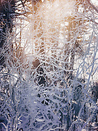 http://Duncan.co/frosty-twigs