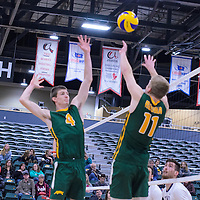 2nd year middle Cody Caldwell (4) of the Regina Cougars  and 3rd year setter Michael Corrigan (11) of the Regina Cougars in action during the Men's Volleyball Home Game vs Trinity Western  on October 28 at the CKHS University of Regina. Credit Matt Johnson/Arthur Images