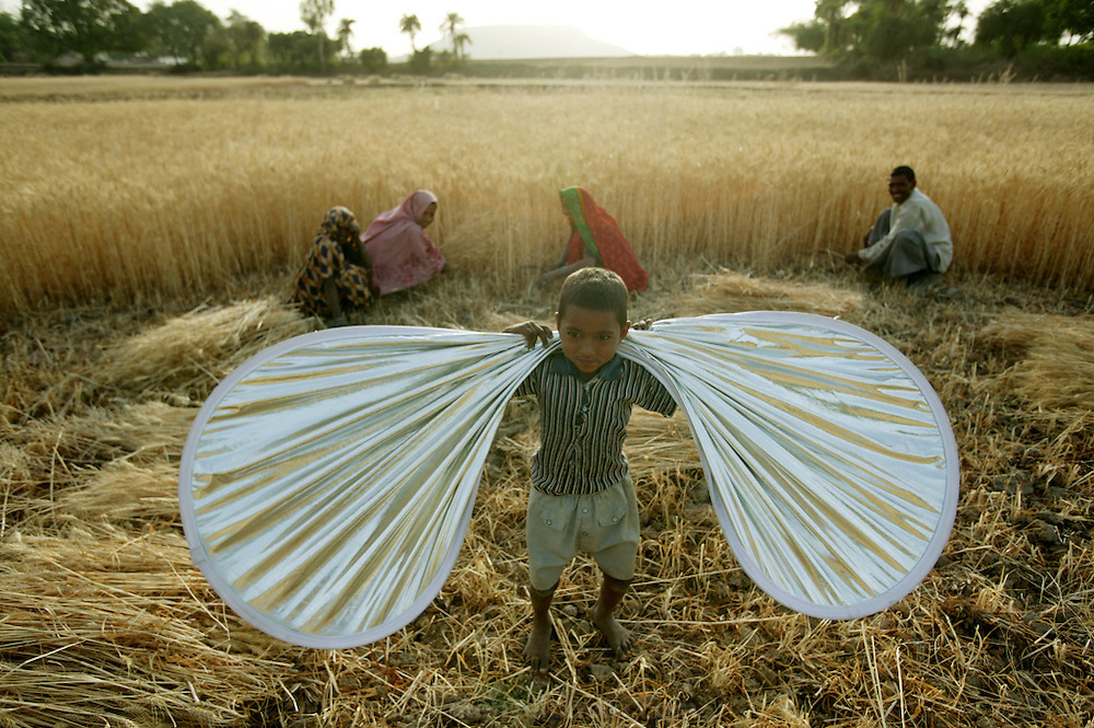 IND.MWdrv04.127.x..One of the Mishi's youngest children plays butterfly with a photographic reflector as her mother and extended family harvest wheat in Ahraura Village, Uttar Pradesh, India. Revisit with the family, 2004. The Yadavs were India's participants in Material World: A Global Family Portrait, 1994 (pages: 64-65), for which they took all of their possessions out of their house for a family-and-possessions-portrait. Work. Children, Child..