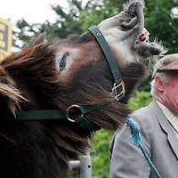 Bobby was enjoying a laugh with PJ Murray at the Spancilhill Horse Fair on Friday.<br />