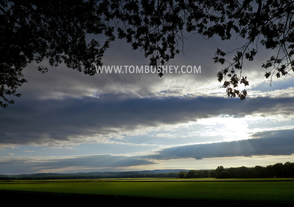 Pine Island, New York - A view of fields at Pine Island Turf Nursery on June 14, 2014.
