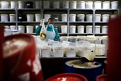 A worker at the National Institute of Occupational Health(NIOH) moves the lungs and heart of a former miner.  All of the buckets in this room contain the organs of ex-miners.  By law any person who worked in a mine in South Africa has a right to have his lungs and heart examined for occupational lung disease in order to see if the worker's family should get compensation.  The process can take up to 6 years. South African Gold miners are particularly vulnerable to contracting TB because of the small, poorly ventilated work and living conditions, high rates of HIV and high rates of silicosis, a lung disease often found in miners that increases the chance of having active TB.
