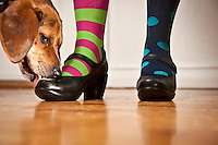 #10 Shine Shoes &amp; #11 Change Socks<br /> &lt;br&gt;Arlo, Beagle<br /> &lt;p&gt;<br /> Yes, his name really is Arlo.  And yes, he is named after Arlo Guthrie, Woody's famous son.