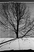 Tree shadow on a brick wall in Long Island City queens.