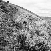 Heather Goodrich rides spring singletrack along a ridgeline in Pocatello Idaho.