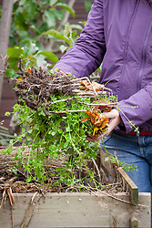 Adding suitable material to a compost heap