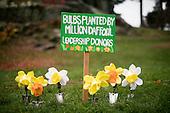 15.11.06 - NYBG Million Daffodil